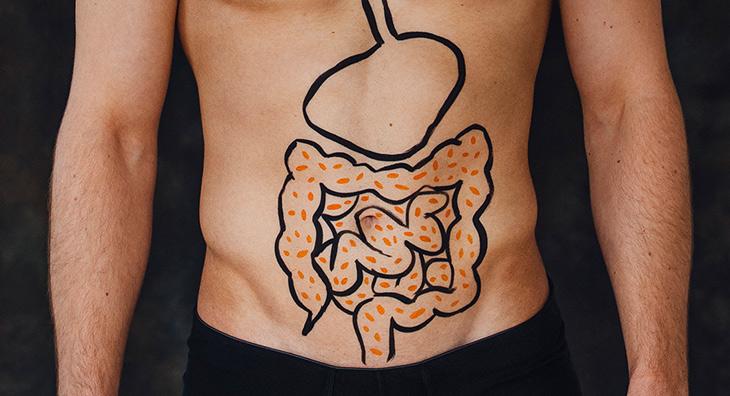 Mikrobiom im Darm